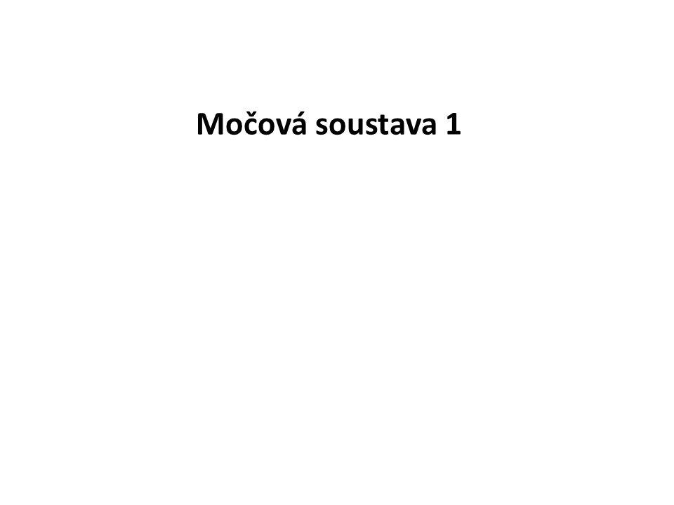 Obsah 1.Homeostáza 2.Části močového ústrojí 3.Funkce močového ústrojí 4.Stavba ledvin