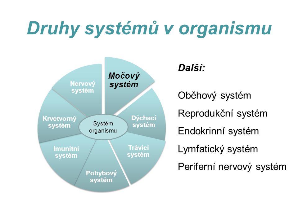 Druhy systémů v organismu Další: Oběhový systém Reprodukční systém Endokrinní systém Lymfatický systém Periferní nervový systém Močový systém Dýchací systém Trávicí systém Pohybový systém Imunitní systém Krvetvorný systém Nervový systém Systém organismu