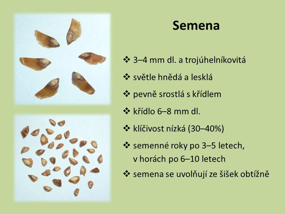 Semena  3–4 mm dl. a trojúhelníkovitá  světle hnědá a lesklá  pevně srostlá s křídlem  křídlo 6–8 mm dl.  klíčivost nízká (30–40%)  semenné roky