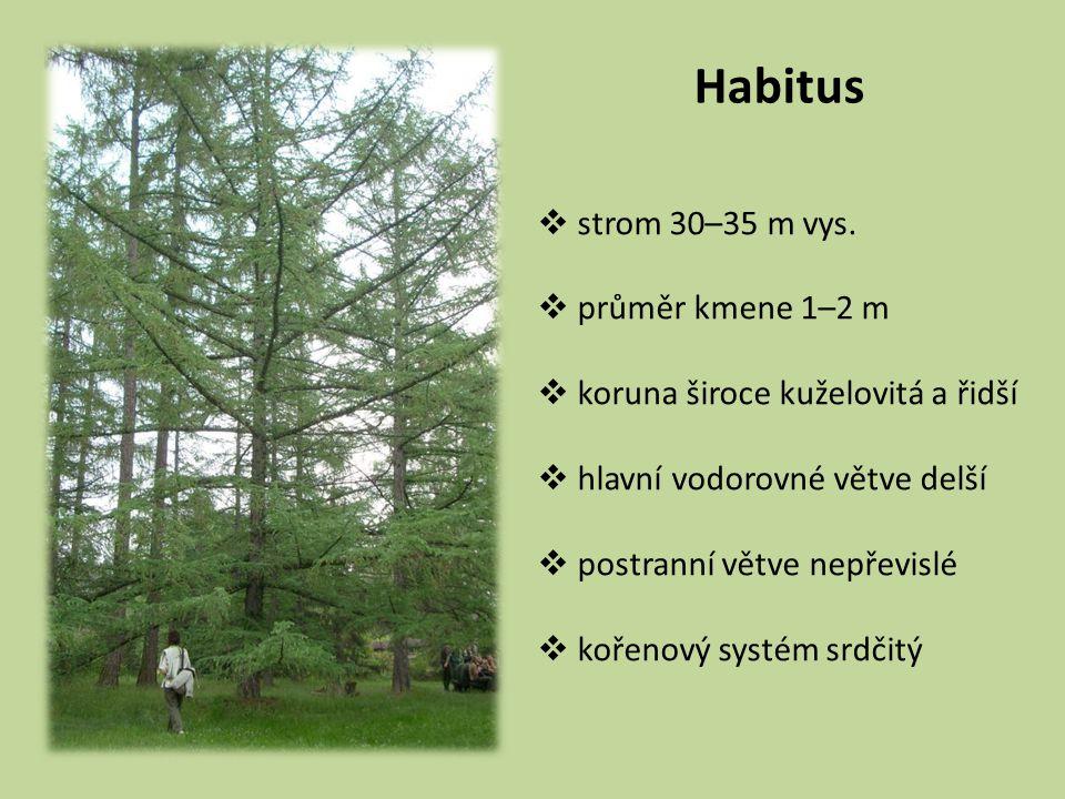 Habitus  strom 30–35 m vys.