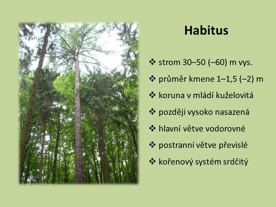 Habitus  strom 30–50 (–60) m vys.  průměr kmene 1–1,5 (–2) m  koruna v mládí kuželovitá  později vysoko nasazená  hlavní větve vodorovné  postra