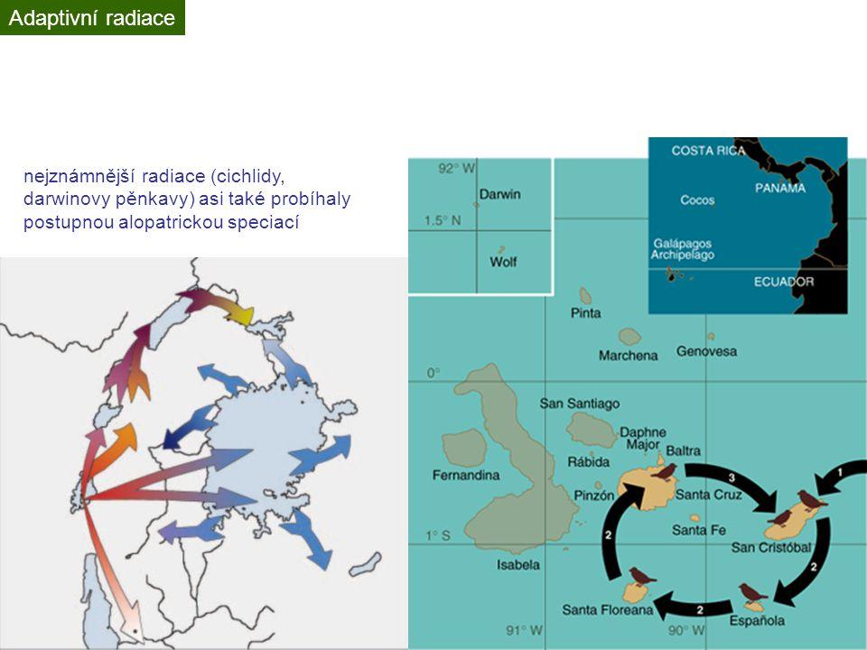 Adaptivní radiace nejznámnější radiace (cichlidy, darwinovy pěnkavy) asi také probíhaly postupnou alopatrickou speciací