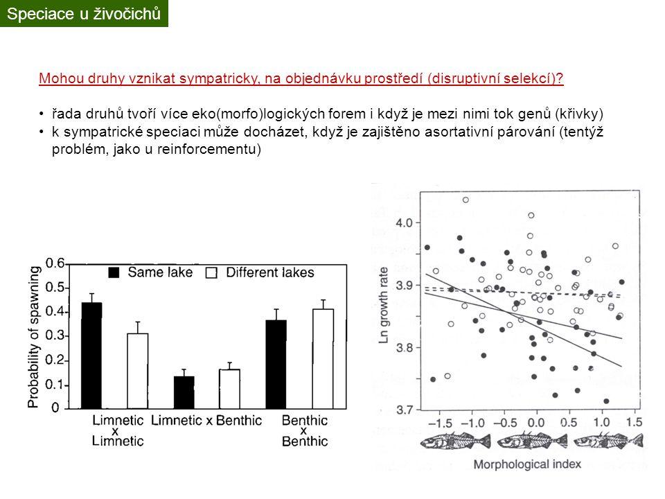 Adaptivní radiace Radiace bývá do určité míry prediktabilní – pronikání do daných ekologických nik
