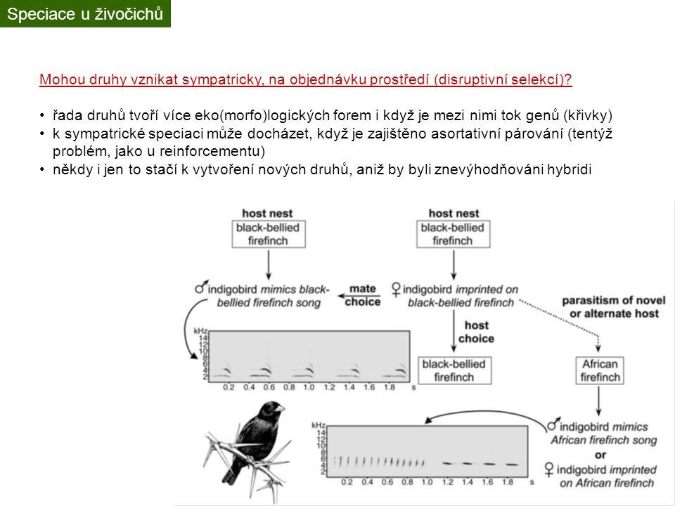 Speciace u živočichů Mohou druhy vznikat sympatricky, na objednávku prostředí (disruptivní selekcí)? řada druhů tvoří více eko(morfo)logických forem i