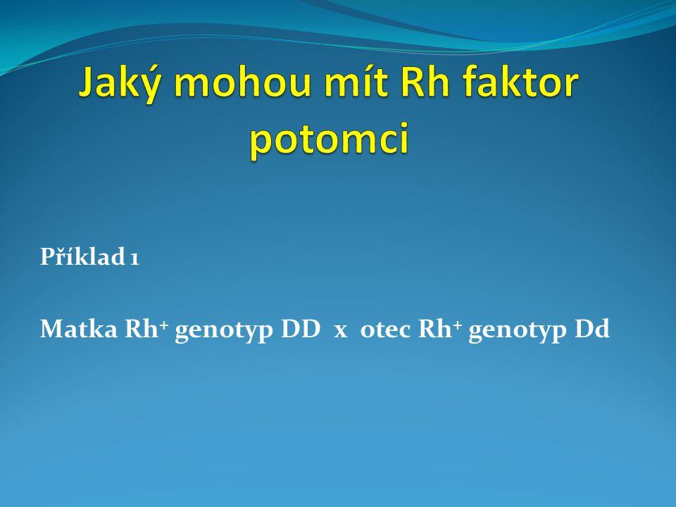 Příklad 1 Matka Rh + genotyp DD x otec Rh + genotyp Dd