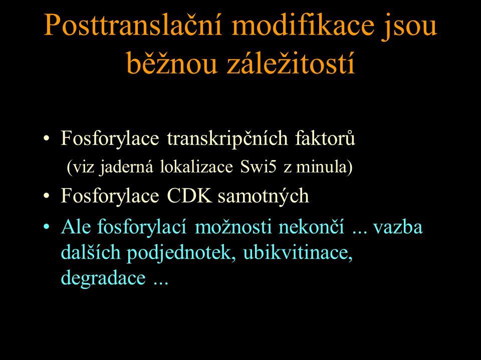Posttranslační modifikace jsou běžnou záležitostí Fosforylace transkripčních faktorů (viz jaderná lokalizace Swi5 z minula) Fosforylace CDK samotných Ale fosforylací možnosti nekončí...
