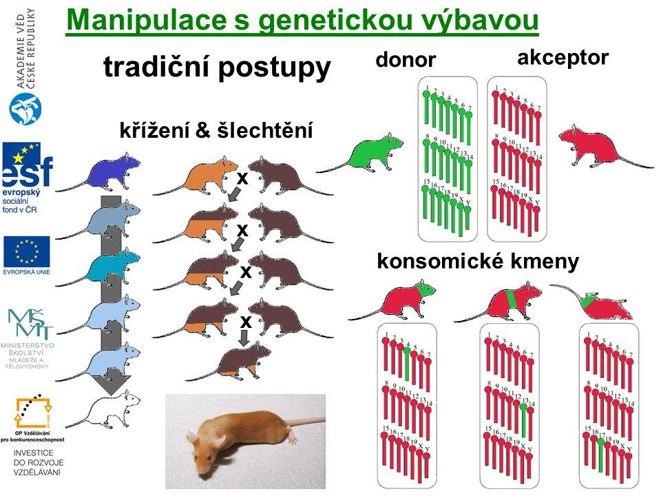 Manipulace s genetickou výbavou tradiční postupy konsomické kmeny donor akceptor křížení & šlechtění x x x x