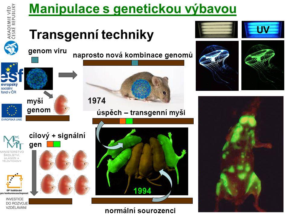 cílový + signální gen Manipulace s genetickou výbavou Transgenní techniky UV myší genom genom viru naprosto nová kombinace genomů úspěch – transgenní myši 1974 1994 normální sourozenci
