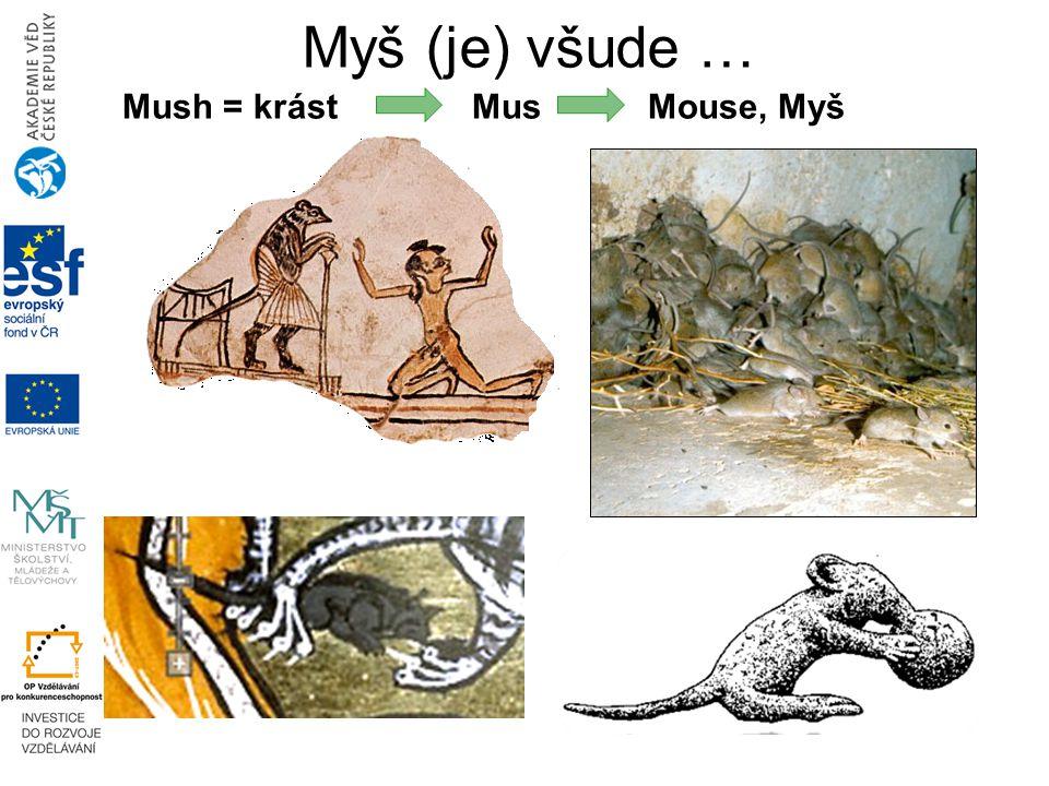 Mush = krást Mus Mouse, Myš Myš (je) všude …