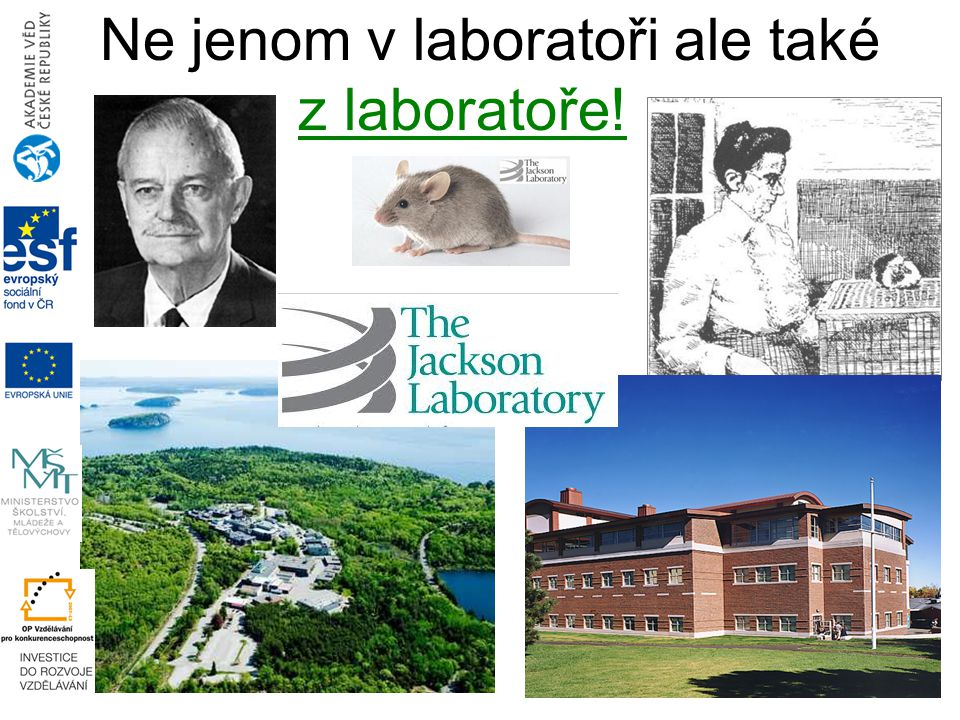 Ne jenom v laboratoři ale také z laboratoře!