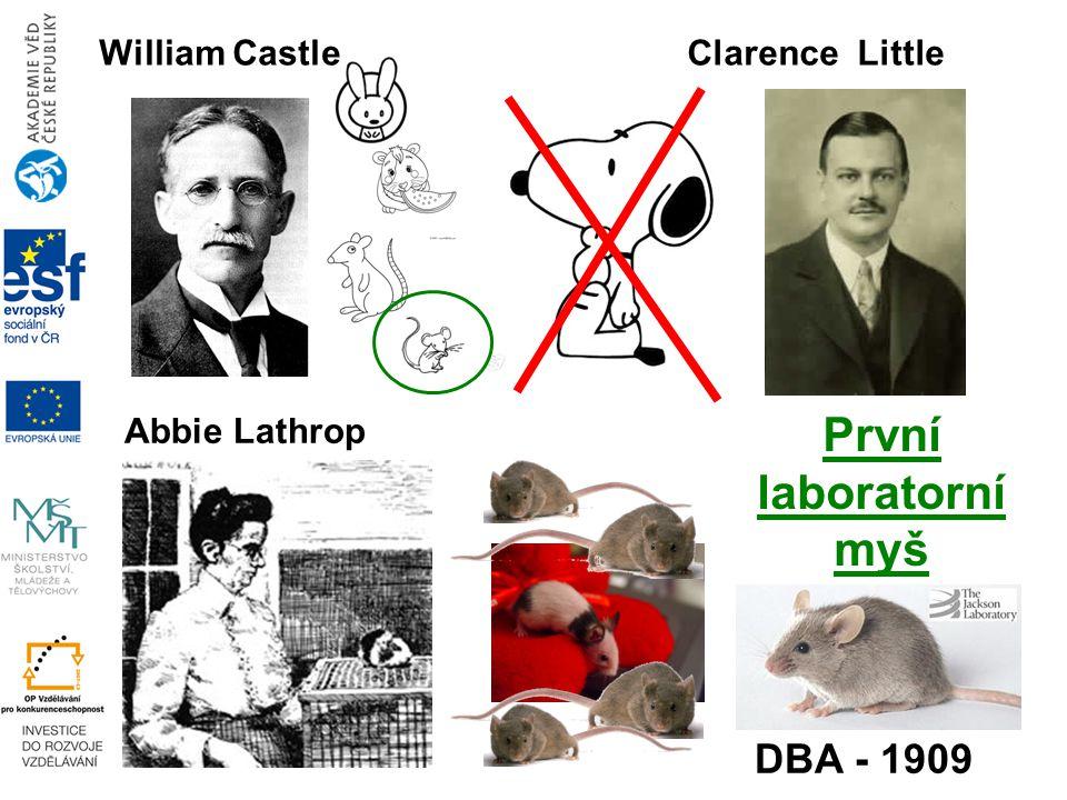 William CastleClarence Little DBA - 1909 Abbie Lathrop První laboratorní myš