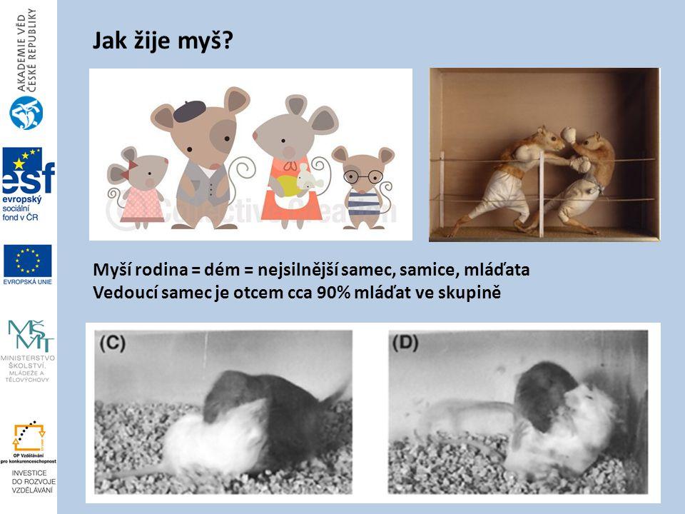Jak žije myš.