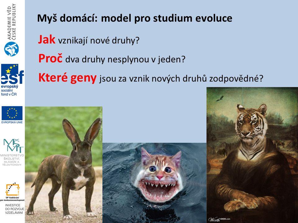 Myš domácí: model pro studium evoluce Jak vznikají nové druhy.