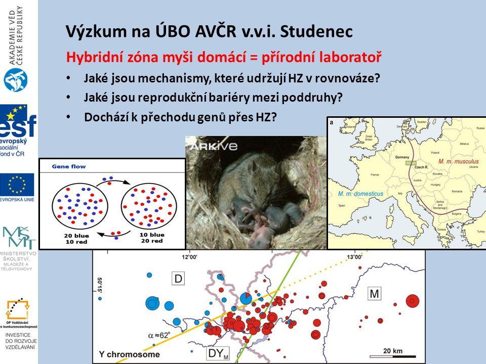 Výzkum na ÚBO AVČR v.v.i.