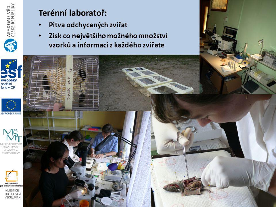Terénní laboratoř: Pitva odchycených zvířat Zisk co největšího možného množství vzorků a informací z každého zvířete