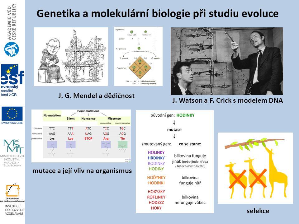 J.G. Mendel a dědičnost Genetika a molekulární biologie při studiu evoluce J.