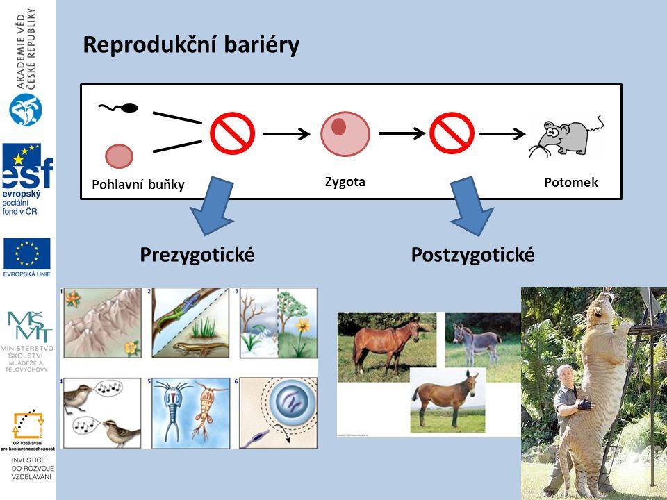 Reprodukční bariéry Pohlavní buňky Zygota Potomek PrezygotickéPostzygotické