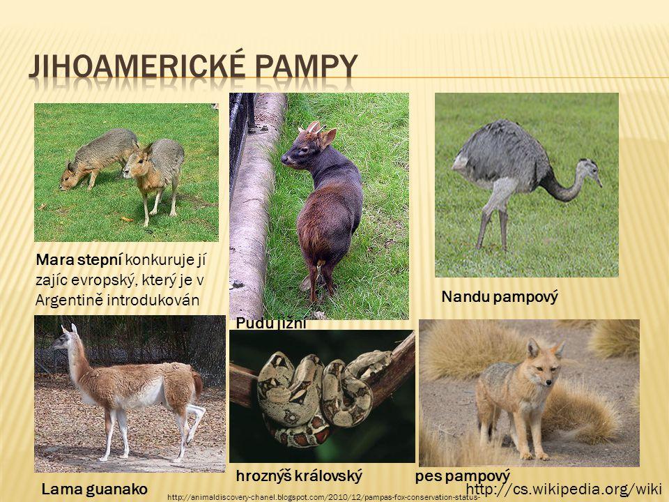 http://cs.wikipedia.org/wiki Mara stepní konkuruje jí zajíc evropský, který je v Argentině introdukován Pudu jižní Nandu pampový Lama guanako pes pamp