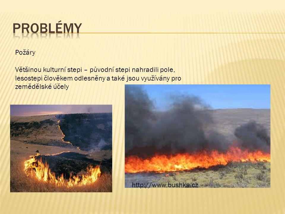 Požáry Většinou kulturní stepi – původní stepi nahradili pole, lesostepi člověkem odlesněny a také jsou využívány pro zemědělské účely http://www.bush