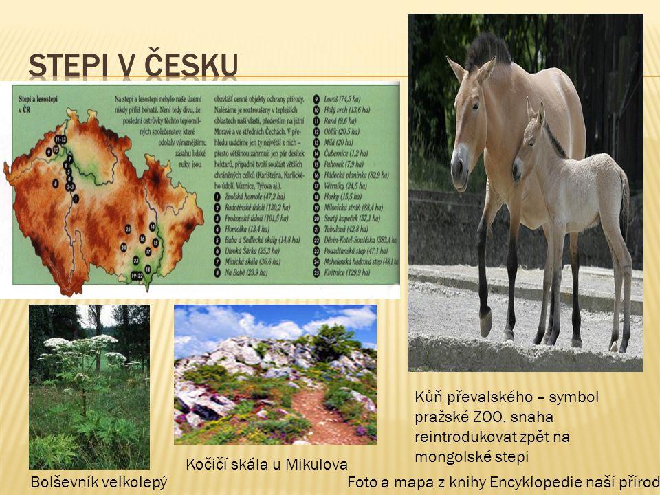 Bolševník velkolepý Kůň převalského – symbol pražské ZOO, snaha reintrodukovat zpět na mongolské stepi Kočičí skála u Mikulova Foto a mapa z knihy Enc