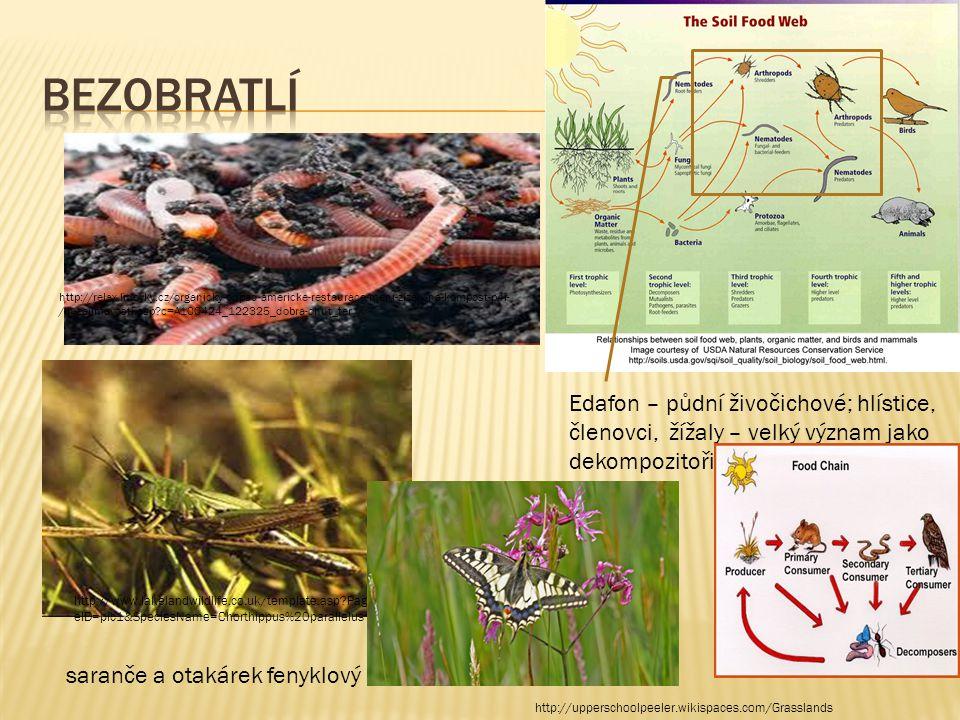 Edafon – půdní živočichové; hlístice, členovci, žížaly – velký význam jako dekompozitoři http://relax.lidovky.cz/organicky-odpad-americke-restaurace-m