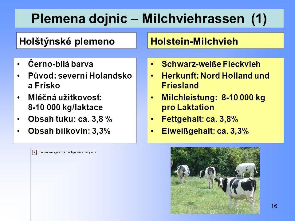 Plemena dojnic – Milchviehrassen (1) Holštýnské plemeno Černo-bílá barva Původ: severní Holandsko a Frísko Mléčná užitkovost: 8-10 000 kg/laktace Obsa