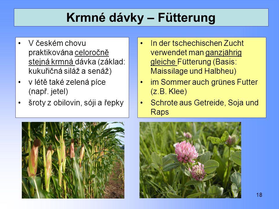Krmné dávky – Fütterung V českém chovu praktikována celoročně stejná krmná dávka (základ: kukuřičná siláž a senáž) v létě také zelená píce (např. jete