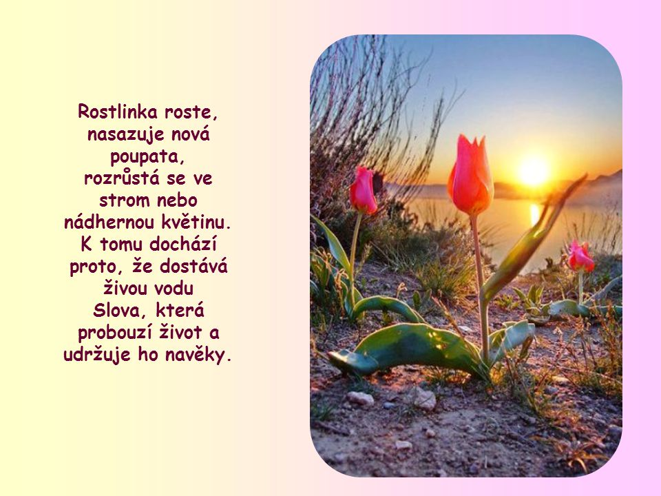 Tak jako poušť vykvete pouze po vydatném dešti, tak také semena, zasetá v nás křtem, mohou vyklíčit pouze tehdy, jsou-li svlažena slovem Božím.