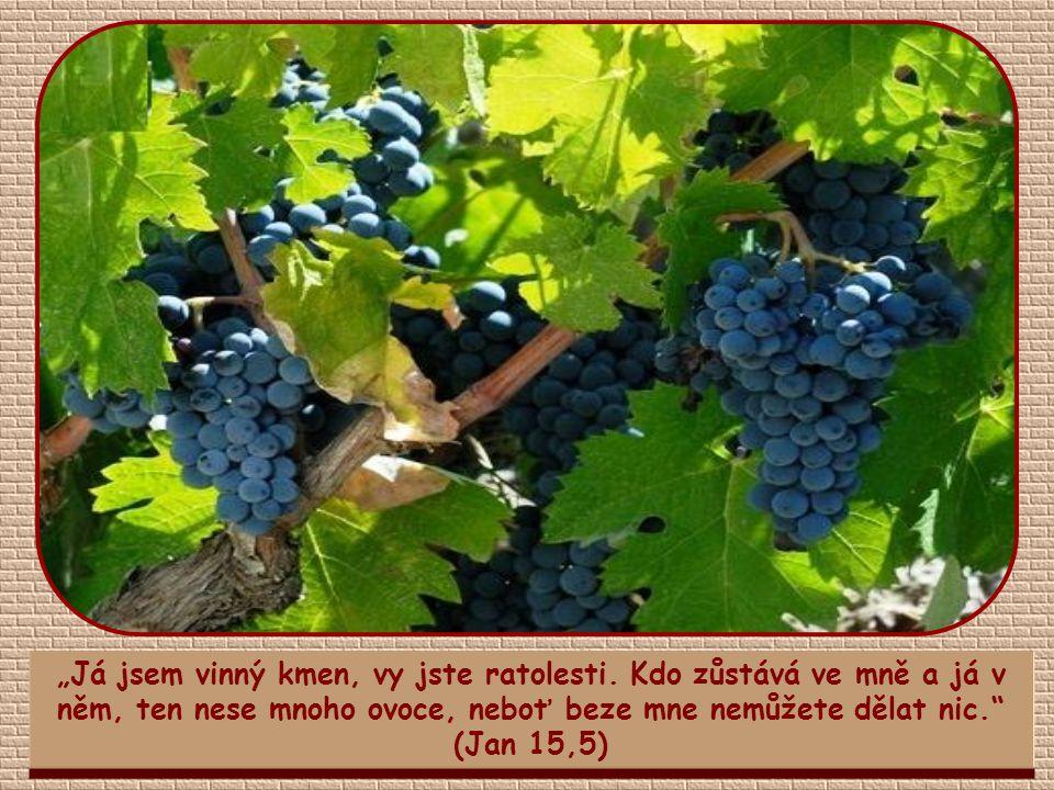 """""""Mnoho ovoce však neznamená pouze duchovní a hmotné dobro pro druhé, ale i pro tebe."""