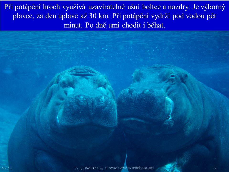12 Obr. č. 11 Při potápění hroch využívá uzavíratelné ušní boltce a nozdry. Je výborný plavec, za den uplave až 30 km. Při potápění vydrží pod vodou p