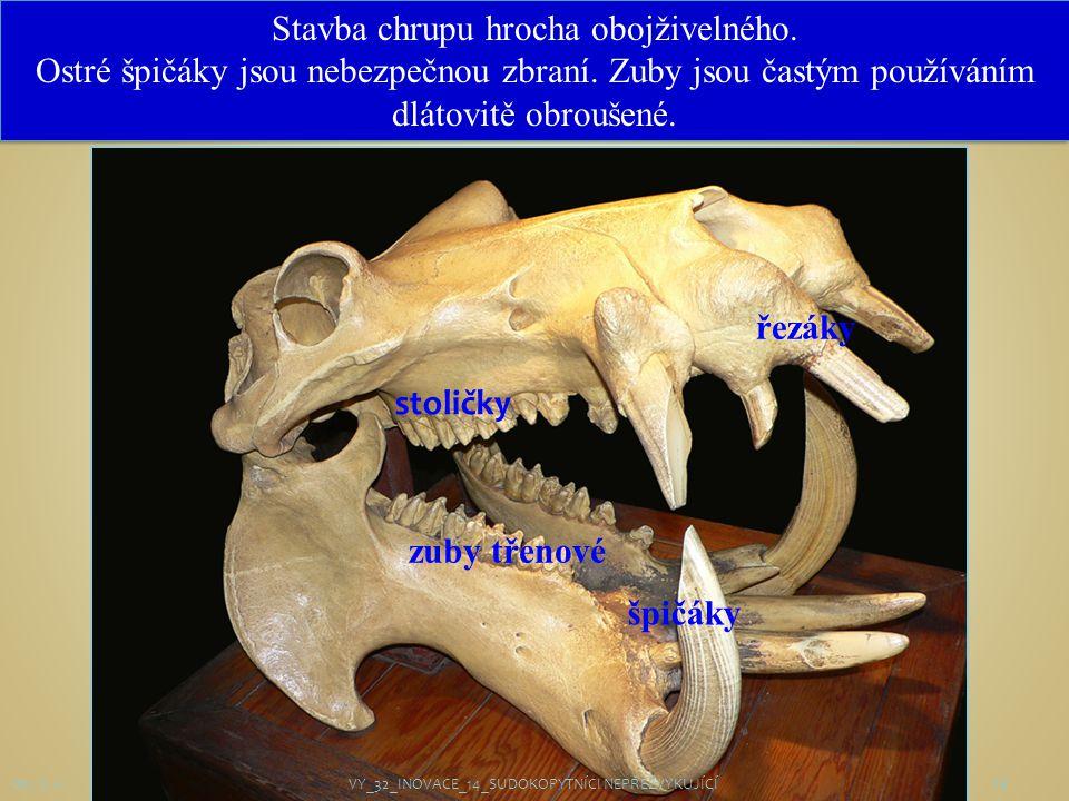 14 řezáky špičáky zuby třenové stoličky Obr. č. 14 Stavba chrupu hrocha obojživelného. Ostré špičáky jsou nebezpečnou zbraní. Zuby jsou častým používá