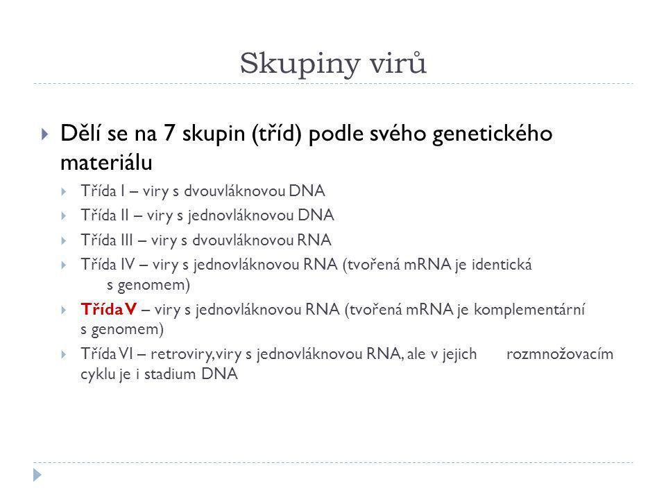 Skupiny virů  Dělí se na 7 skupin (tříd) podle svého genetického materiálu  Třída I – viry s dvouvláknovou DNA  Třída II – viry s jednovláknovou DN