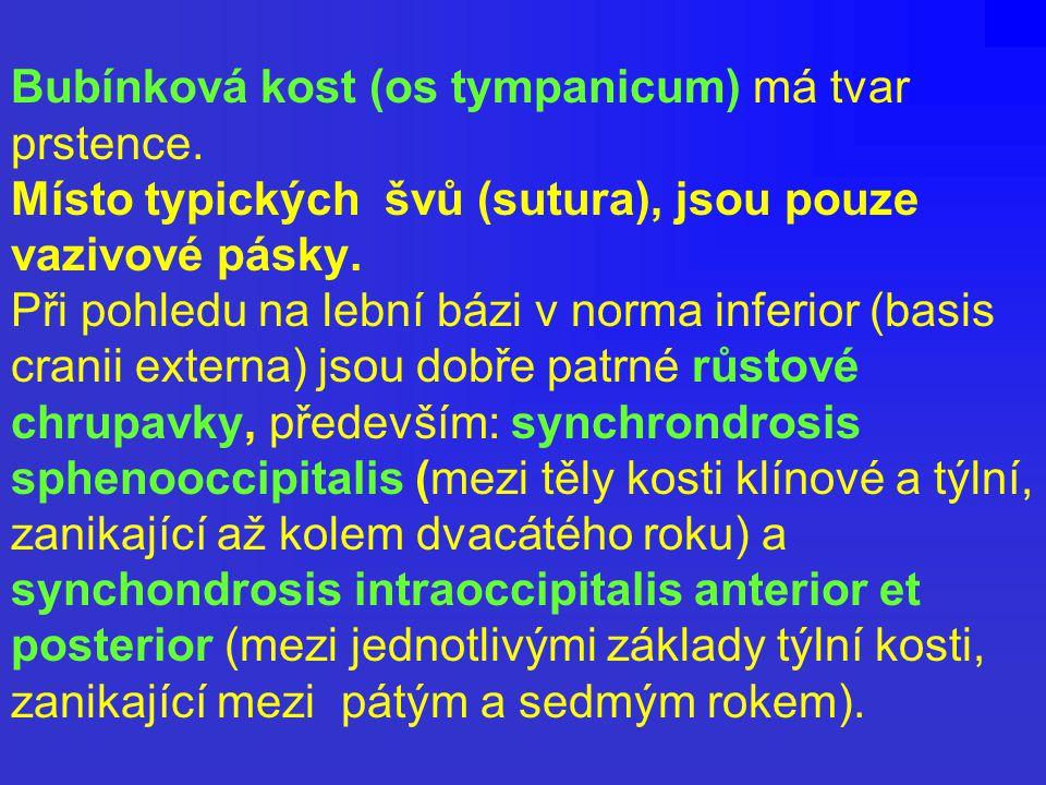 Bubínková kost (os tympanicum) má tvar prstence. Místo typických švů (sutura), jsou pouze vazivové pásky. Při pohledu na lební bázi v norma inferior (