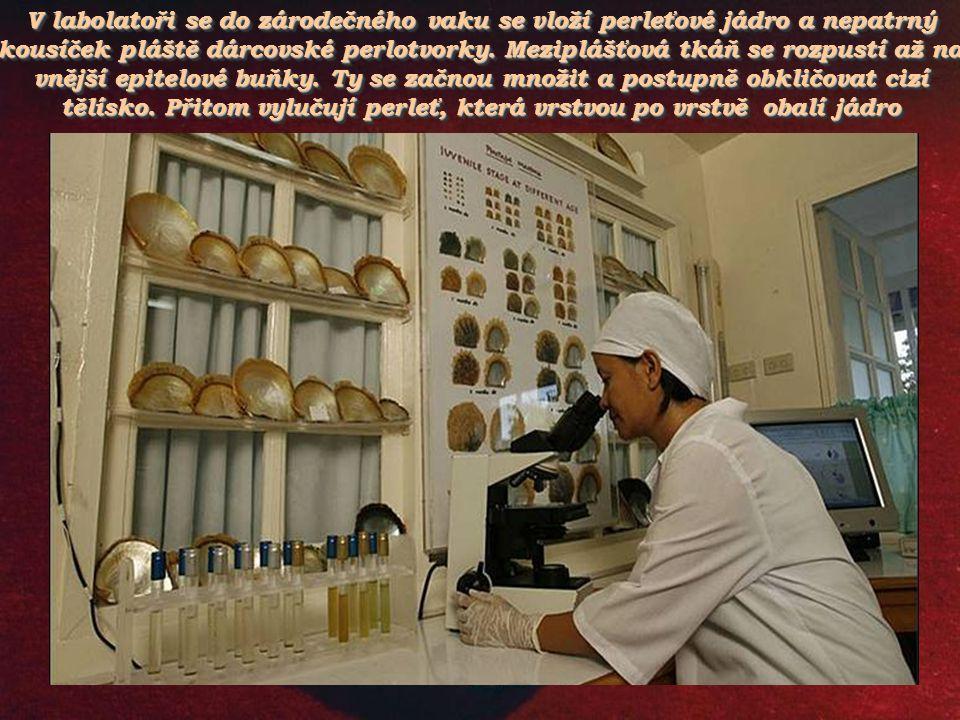 Z čínských zkušeností vycházel Japonec Kokichi Mikimoto, který založil první farmu pro chov perlotvorek a pokoušel se vypěstovat umělé perly. První po