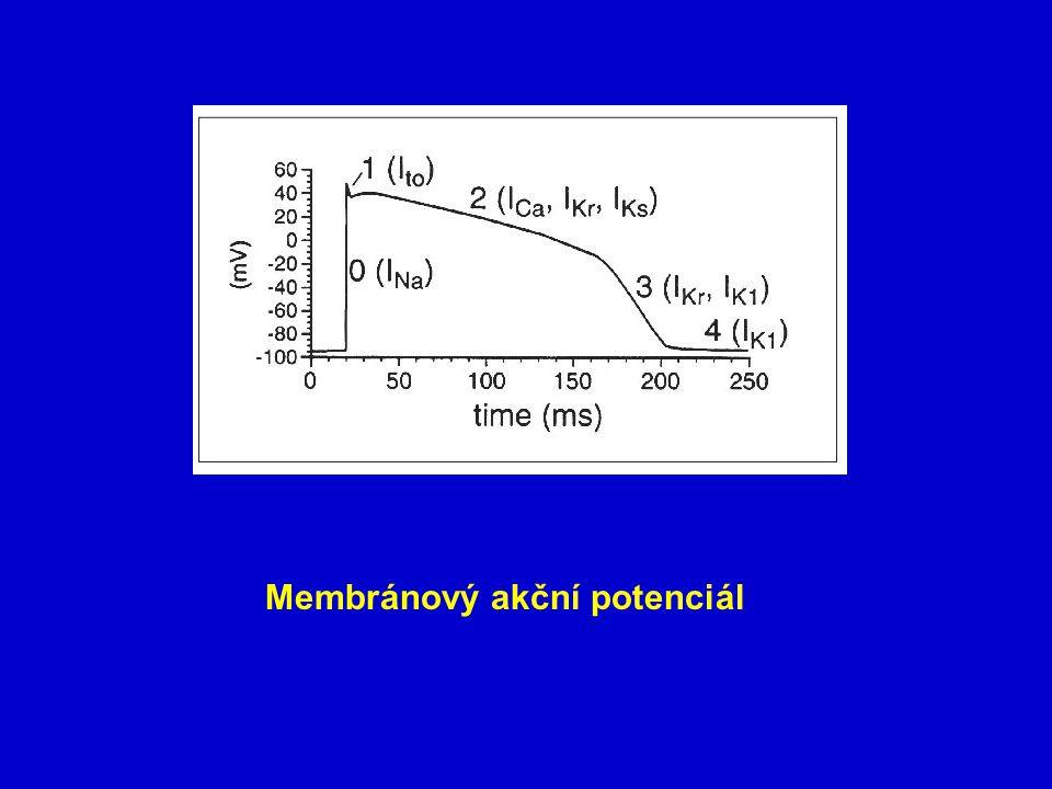 Membránový akční potenciál