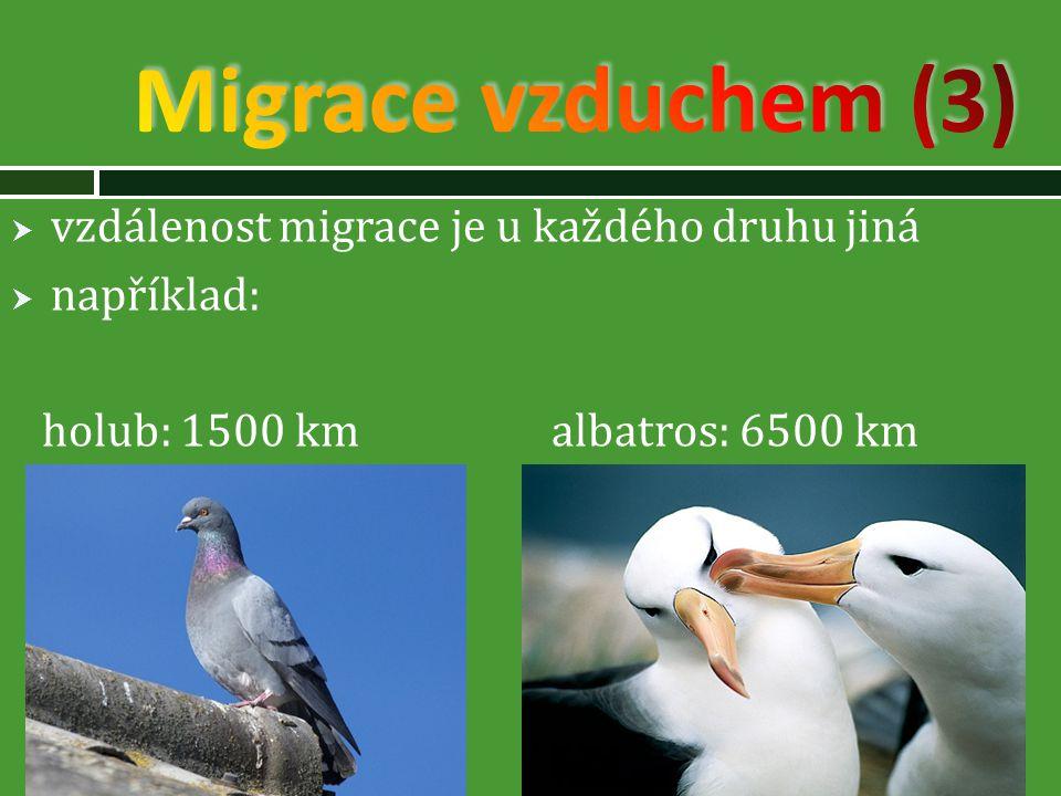  vzdálenost migrace je u každého druhu jiná  například: holub: 1500 km albatros: 6500 km