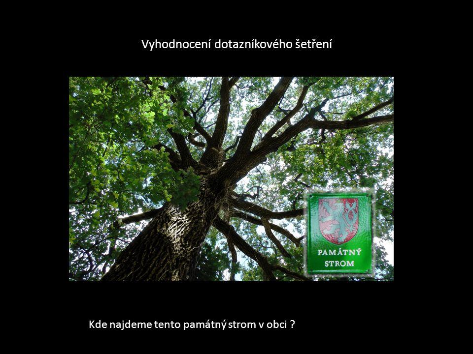 Kde najdeme tento památný strom v obci ?