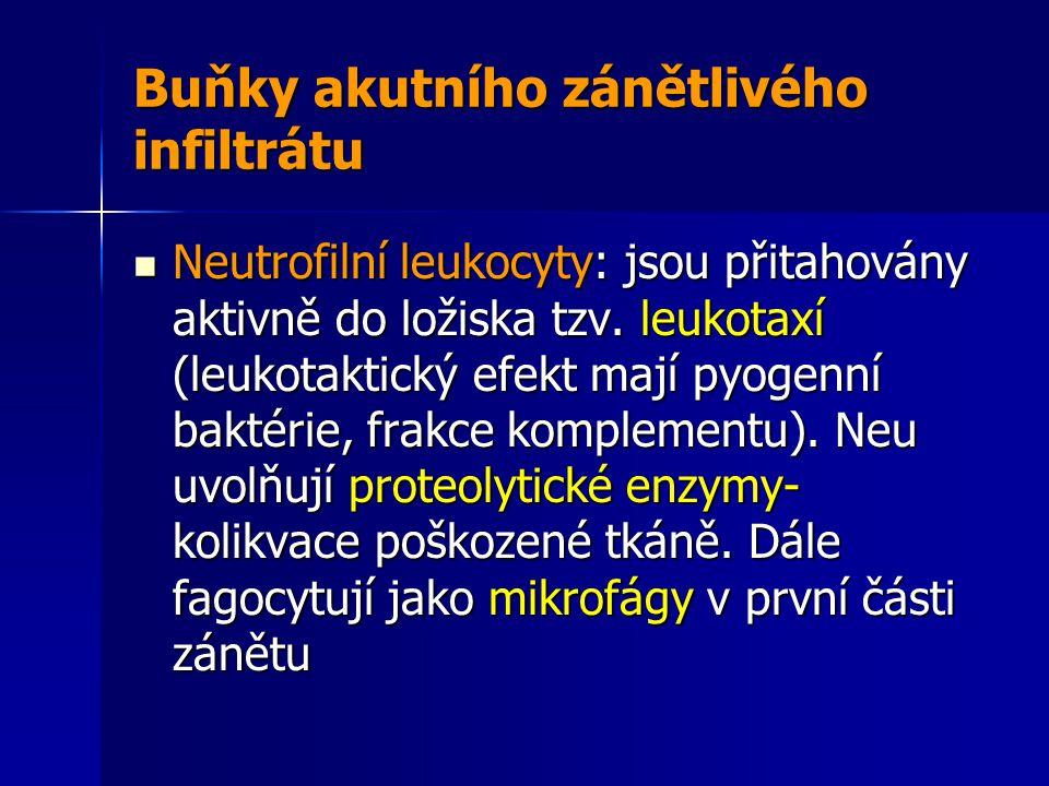 Neutrofilní leukocyty: jsou přitahovány aktivně do ložiska tzv.