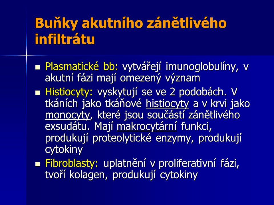 Buňky akutního zánětlivého infiltrátu Plasmatické bb: vytvářejí imunoglobulíny, v akutní fázi mají omezený význam Plasmatické bb: vytvářejí imunoglobulíny, v akutní fázi mají omezený význam Histiocyty: vyskytují se ve 2 podobách.