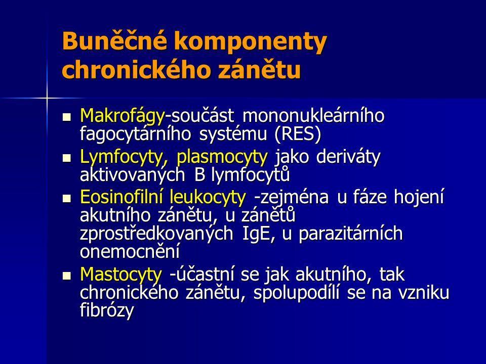 Buněčné komponenty chronického zánětu Makrofágy-součást mononukleárního fagocytárního systému (RES) Makrofágy-součást mononukleárního fagocytárního systému (RES) Lymfocyty, plasmocyty jako deriváty aktivovaných B lymfocytů Lymfocyty, plasmocyty jako deriváty aktivovaných B lymfocytů Eosinofilní leukocyty -zejména u fáze hojení akutního zánětu, u zánětů zprostředkovaných IgE, u parazitárních onemocnění Eosinofilní leukocyty -zejména u fáze hojení akutního zánětu, u zánětů zprostředkovaných IgE, u parazitárních onemocnění Mastocyty -účastní se jak akutního, tak chronického zánětu, spolupodílí se na vzniku fibrózy Mastocyty -účastní se jak akutního, tak chronického zánětu, spolupodílí se na vzniku fibrózy