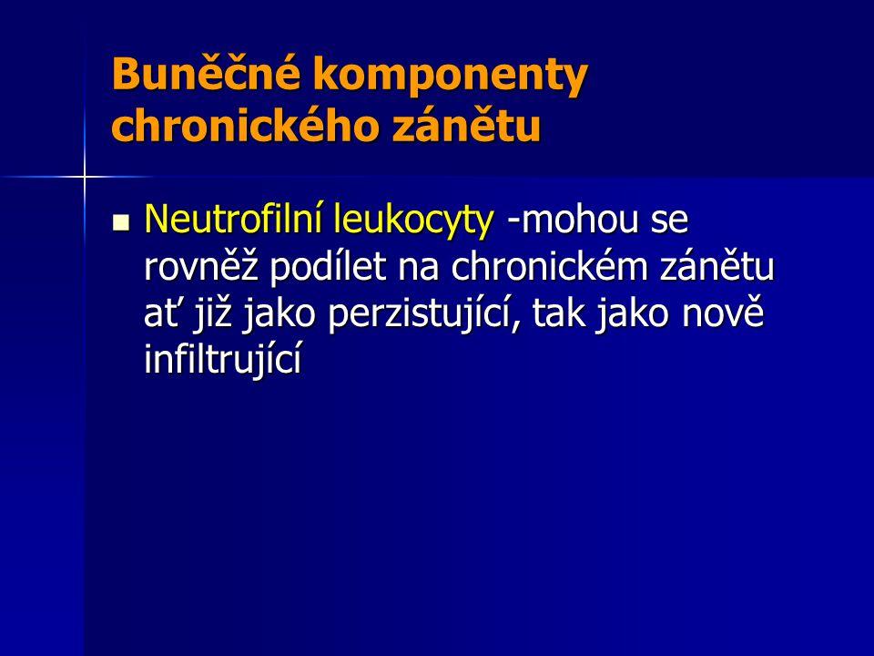 Buněčné komponenty chronického zánětu Neutrofilní leukocyty -mohou se rovněž podílet na chronickém zánětu ať již jako perzistující, tak jako nově infiltrující Neutrofilní leukocyty -mohou se rovněž podílet na chronickém zánětu ať již jako perzistující, tak jako nově infiltrující