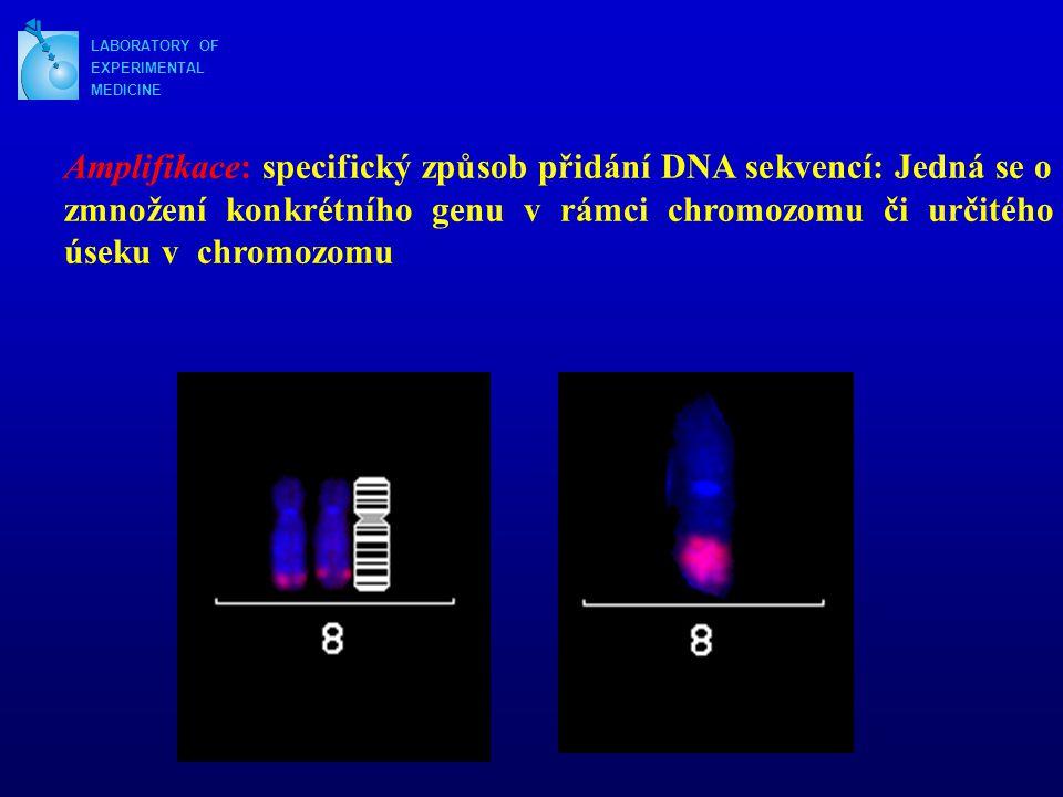 LABORATORY OF EXPERIMENTAL MEDICINE Amplifikace: specifický způsob přidání DNA sekvencí: Jedná se o zmnožení konkrétního genu v rámci chromozomu či určitého úseku v chromozomu