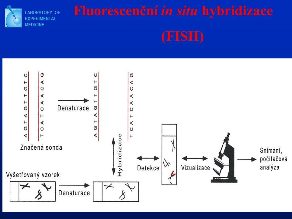 LABORATORY OF EXPERIMENTAL MEDICINE Fluorescenční in situ hybridizace (FISH)