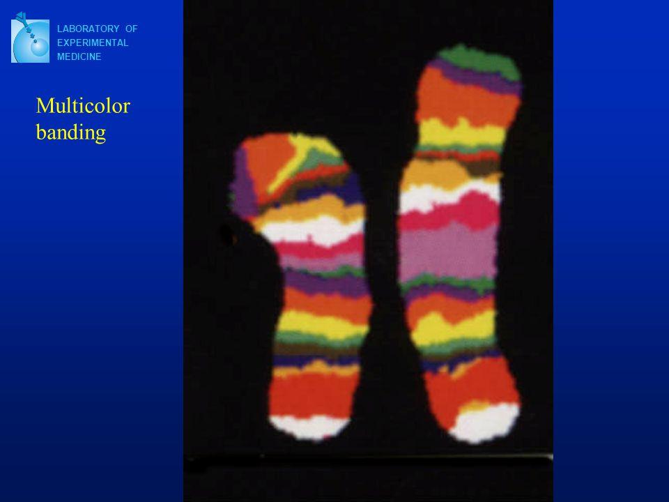LABORATORY OF EXPERIMENTAL MEDICINE Multicolor banding