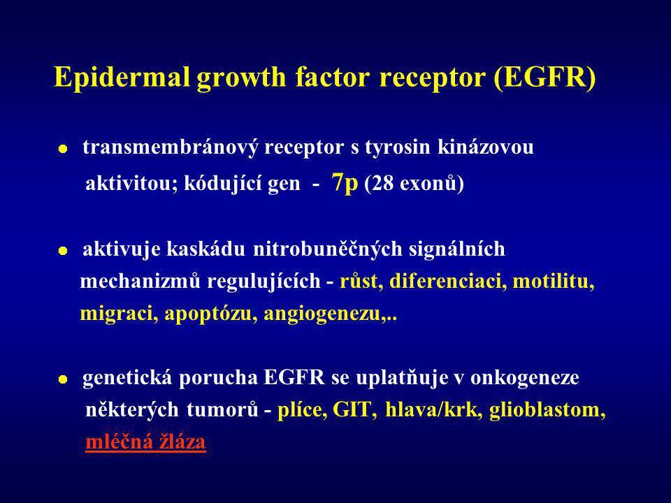 Epidermal growth factor receptor (EGFR)  transmembránový receptor s tyrosin kinázovou aktivitou; kódující gen - 7p (28 exonů)  aktivuje kaskádu nitrobuněčných signálních mechanizmů regulujících - růst, diferenciaci, motilitu, migraci, apoptózu, angiogenezu,..