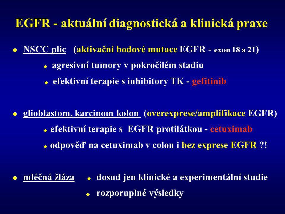 EGFR - aktuální diagnostická a klinická praxe  NSCC plic (aktivační bodové mutace EGFR - exon 18 a 21 )  agresivní tumory v pokročilém stadiu  efektivní terapie s inhibitory TK - gefitinib  glioblastom, karcinom kolon (overexprese/amplifikace EGFR)  efektivní terapie s EGFR protilátkou - cetuximab  odpověď na cetuximab v colon i bez exprese EGFR ?.
