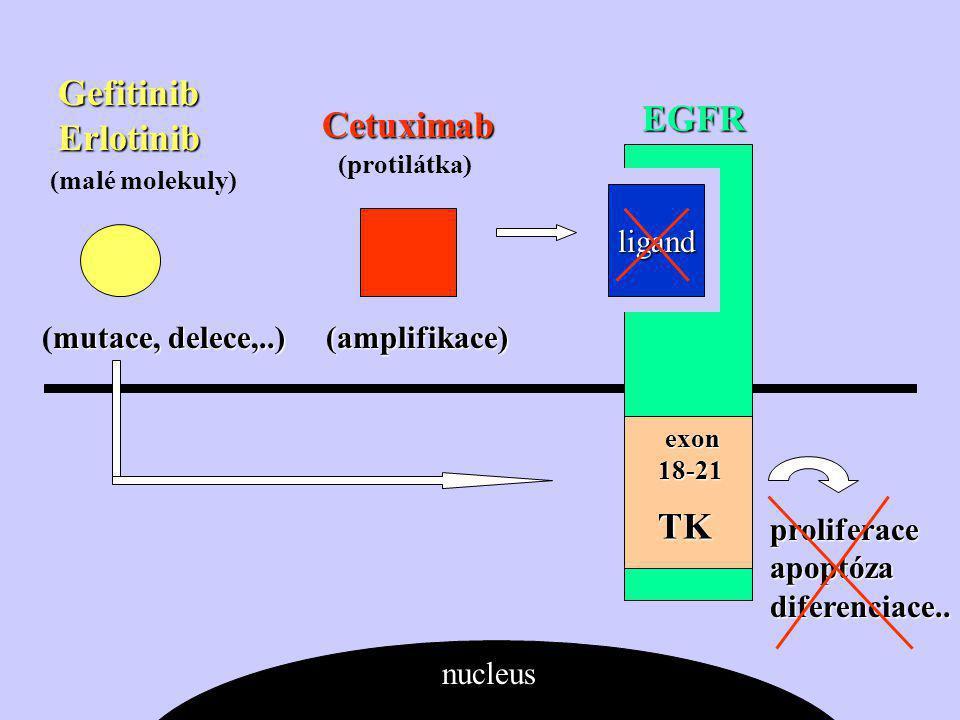 Gefitinib Erlotinib mutace, delece,..) (amplifikace) (mutace, delece,..) (amplifikace) Cetuximab EGFR ligand TK proliferace apoptóza diferenciace..