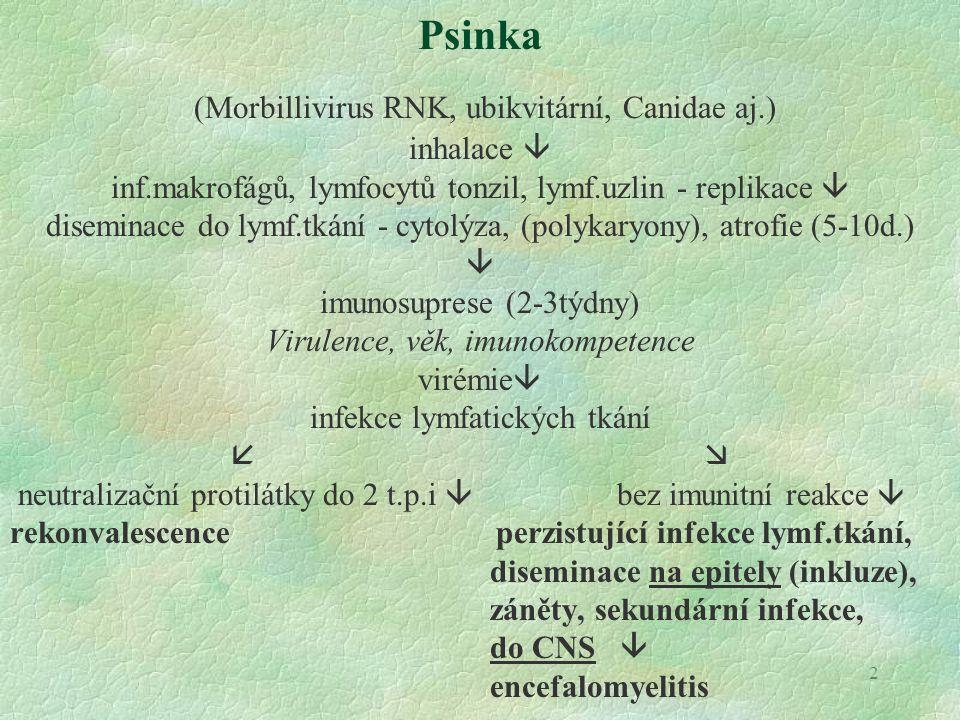 2 Psinka (Morbillivirus RNK, ubikvitární, Canidae aj.) inhalace  inf.makrofágů, lymfocytů tonzil, lymf.uzlin - replikace  diseminace do lymf.tkání -