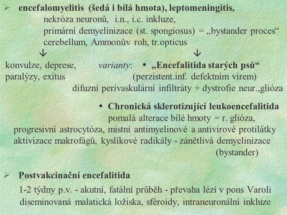 """3  encefalomyelitis (šedá i bílá hmota), leptomeningitis, nekróza neuronů, i.n., i.c. inkluze, primární demyelinizace (st. spongiosus) = """"bystander p"""