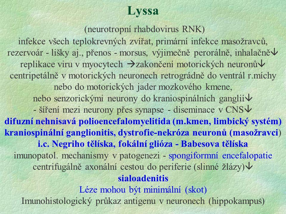 5 Lyssa (neurotropní rhabdovirus RNK) infekce všech teplokrevných zvířat, primární infekce masožravců, rezervoár - lišky aj., přenos - morsus, výjimeč
